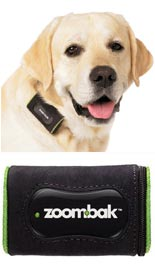 Dog with GPS collar